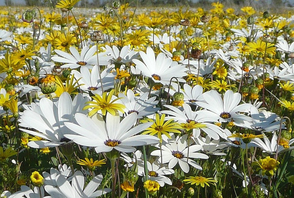 14 Days Spring Flowers And Birds From The Kalahari To The Cape